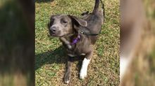Paramedic adopts puppy that survived Hurricane Harvey