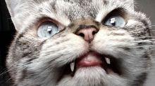 Der kleine Vampir: Diese Katze amüsiert mit ihrem ungewöhnlichen Aussehen