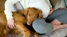 Can Dogs Sense When You're Pregnant?