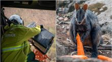 'Operation Rock Wallaby' Airdrops Food To Australia's Fire-Affected Animals