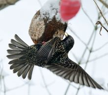 Bird populations in rural France 'collapsing'