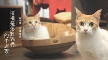 唔準摸貓唔準走近 由動物話事的貓café