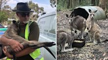Outrage as government resumes kangaroo harvest as bushfire rescues continue