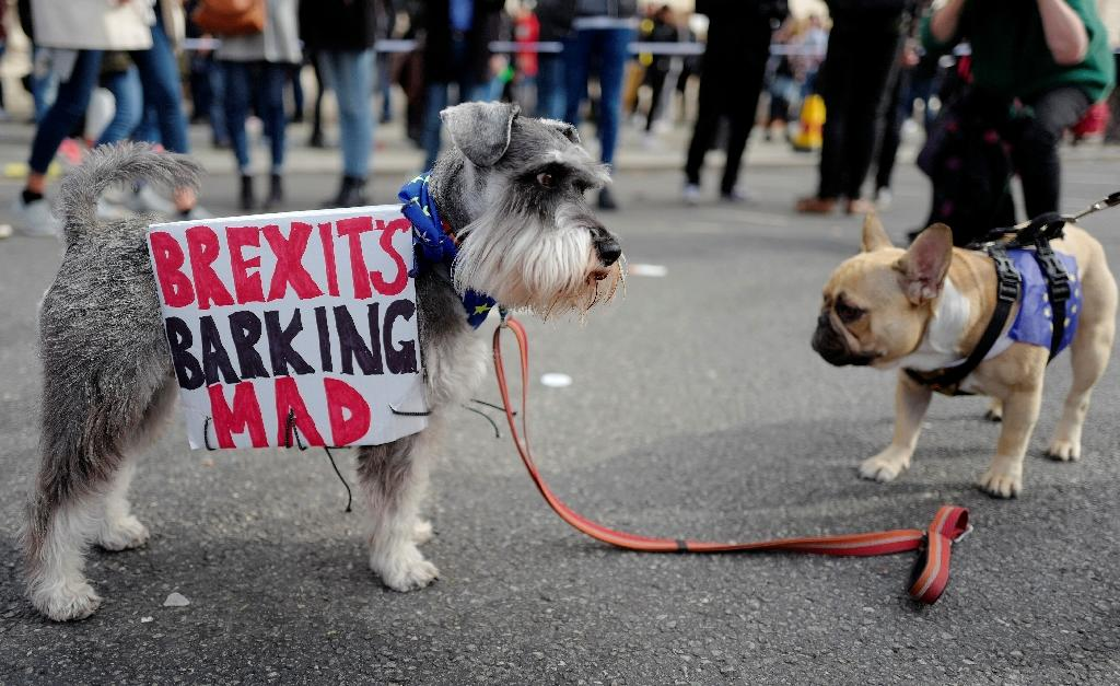 """""""We w8ill not roll over... it's time for the Wooferendum,"""" said Labour MP Stella Creasy in a pun-laden speech. """"Go fetch, people: get Britain a better future"""" (AFP Photo/Tolga AKMEN)"""