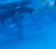 Shark Viciously Attacks Woman On Her Honeymoon