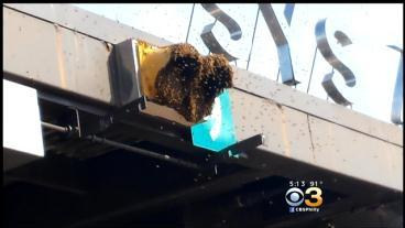 Bees Cause A Buzz On Pa. Turnpike