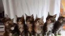 Seven Cute Kittens With Great Reflexes