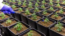 Aurora Cannabis: Der Termin steht fest!