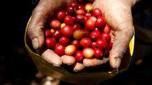 Exportaciones café de Honduras se disparan en julio