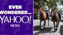 Why do the police still use horses?