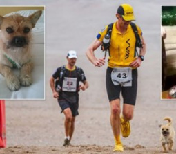 Runner Reunites With Gobi, The Dog That Raced Alongside Him on Marathon, After Pup Vanishes