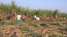 Indian mills contract to export three million tonnes of sugar - trade