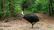 'World's Most Dangerous Bird' Kills 75-Year-Old Owner In Florida