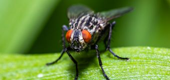 Cuentan que la Casa Blanca sufre una plaga de moscas más longeva que la administración de varios presidentes