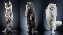 PHOTOS: Cutest catwalk – model cats show off to the camera