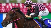 Deep Image makes the cut for Stradbroke