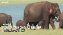 Scoperta coppia di gemelli elefanti?
