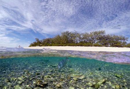 A tourist stands on the beach as a large reef fish digs for food in the reef flats on Lady Elliot Island and 80 kilometers north-east from the town of Bundaberg in Queensland, Australia