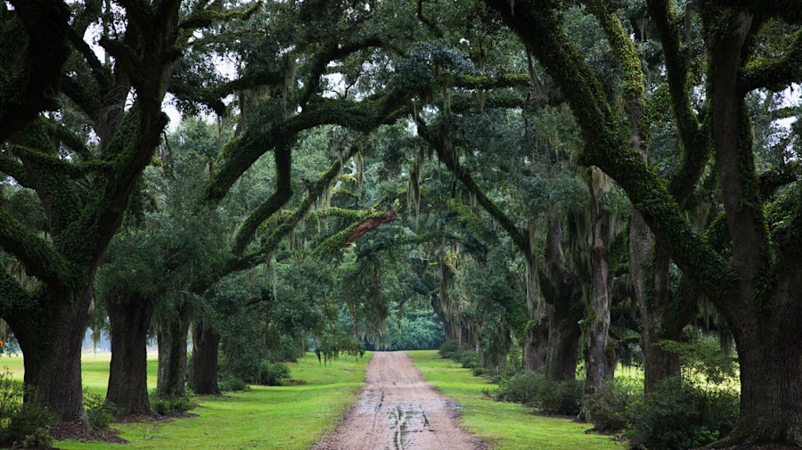 A quaint and tranquil port of call steeped in Southern hospitality – an expert guide to St Francisville