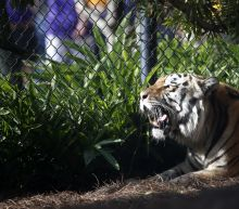LSU has found its new tiger mascot, and he's very cute (Updated)
