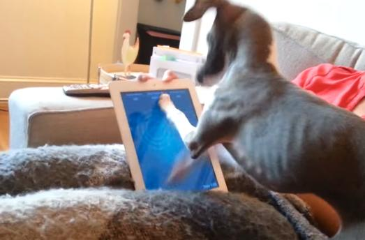 This dog has no patience for your stupid iPad games