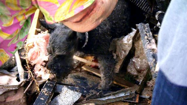 Okla. tornado survivor finds dog buried alive under rubble
