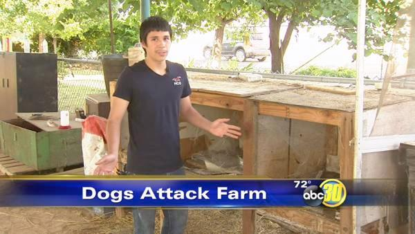 Dog pack kills nearly 80 animals at campus