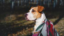 'Guaguarongos' y ponchos, el último grito de la moda mexicana para mascotas