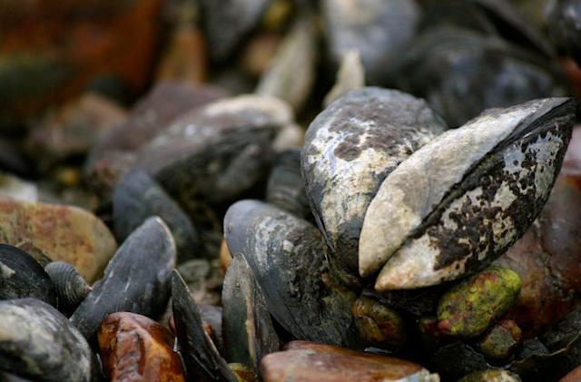 Robot mussels help measure the effects of climate change
