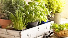 This clever gadget can help you grow a thriving herb garden indoors