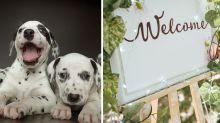 Bride slammed for 'stupid' wedding idea involving puppies