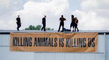 Niederlehme: Tierschützer besetzen Wiesenhof-Schlachthof bei Berlin