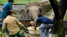 Pakistan's only Asian elephant prepared for new home