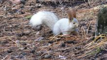 Forgetful squirrel can't remember where his stash is
