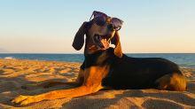 Viaja con tu perro a una de las playas mexicanas que lo permiten
