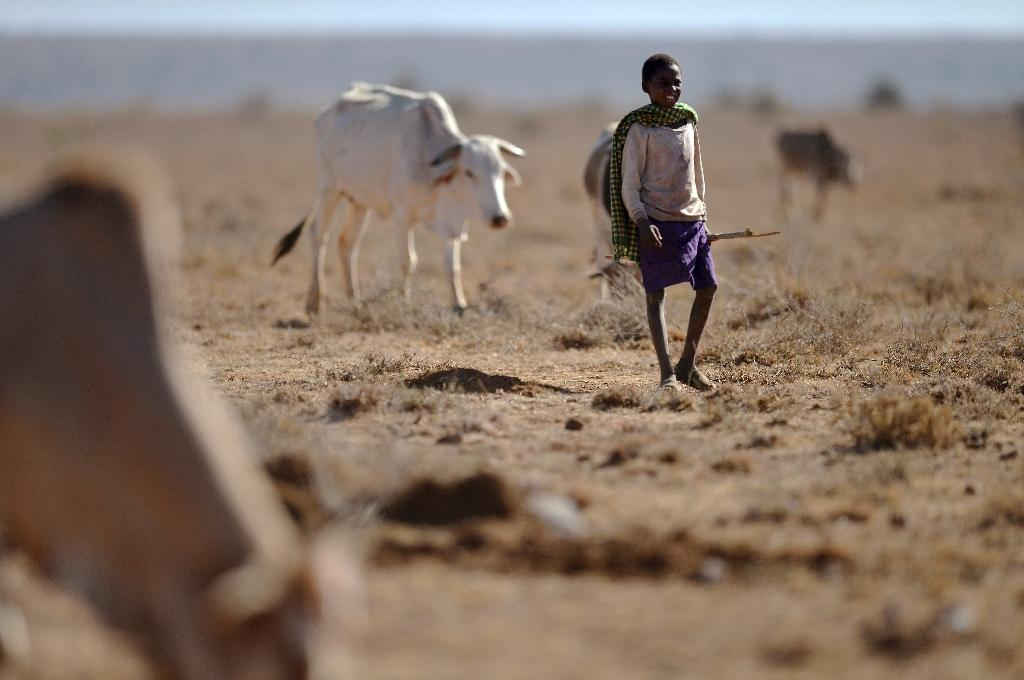 The drought in Kenya has exacerbated clashes between pastoralist communities, which have left over 30 people dead, and also imperilled wildlife (AFP Photo/Tony KARUMBA)