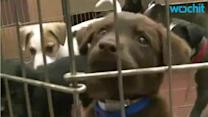 Texans Line Up to Adopt Cats and Dogs After Austin Animal Shelter Got Flooded