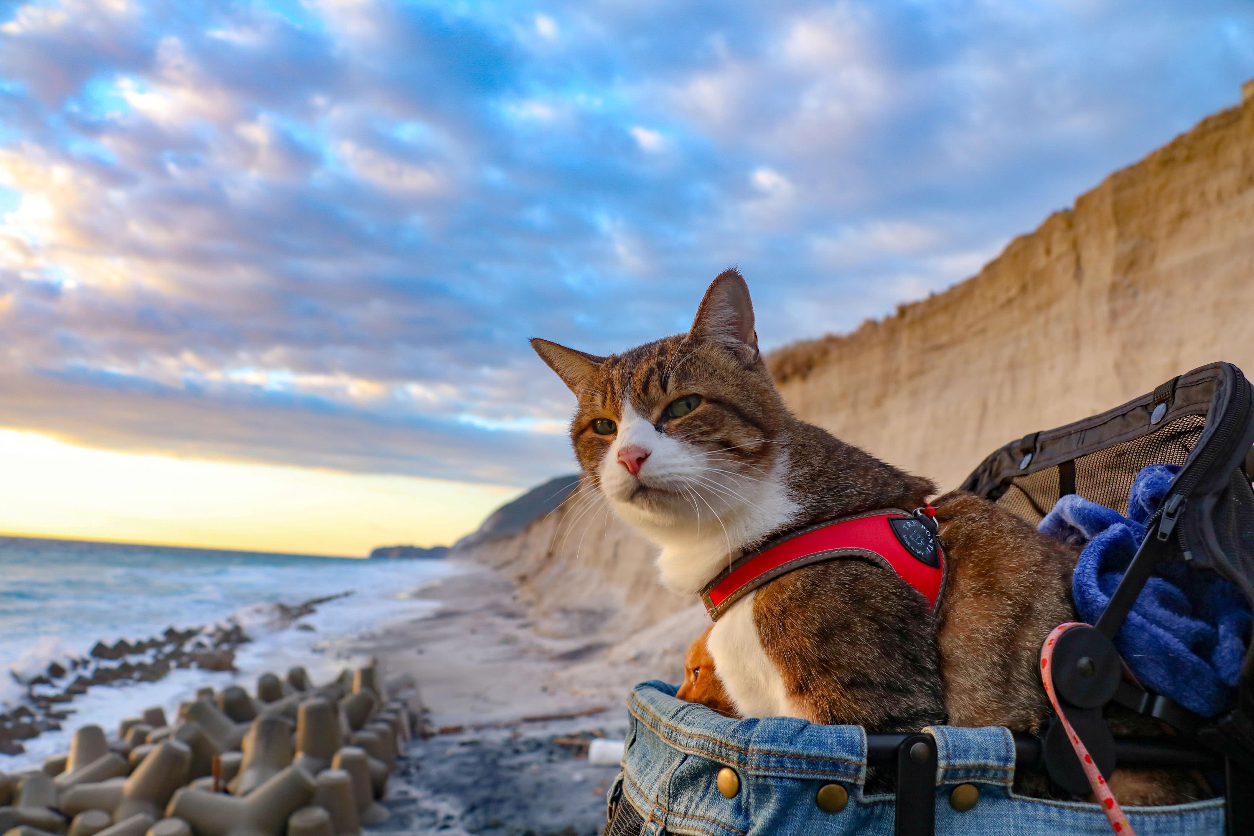 <p>Daikichi on a Japanese beach on his travels wih Daisuke Nagasawa. (Photo: Daisuke Nagasawa/Caters News) </p>