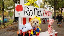 NYC pups in cute and creative costumes for annual Halloween Dog Parade