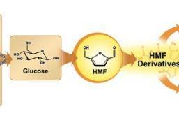 Scientists convert glucose into fuel and polyesters