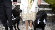 Dog comes to the rescue of nervous bride on her wedding day