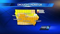 Drought conditions impacting Iowa's crops