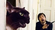 Casal reproduz cenas clássicas do cinema com gatas de estimação