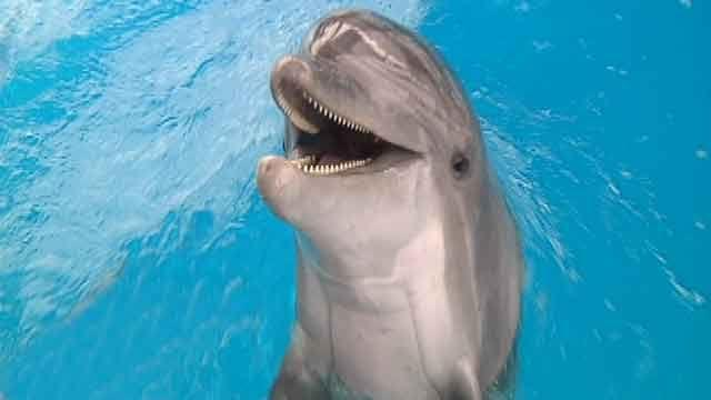 Dolphin inspires Gulf Coast against all odds
