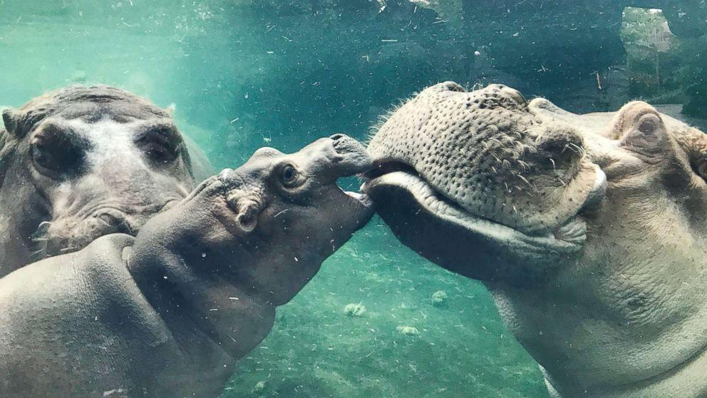 zoo hook up The cincinnati zoo & botanical garden is taking a modern approach to finding the perfect mate for the animals under its care the zookeepers have gotten matchmaking down to a science using a system that zoo director thane maynard described as an animal version of a popular dating site.