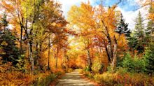 Oh, No! Experts Say Fall Foliage Season Will Be Delayed This Year
