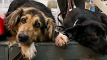 Animal Shelters Are Highly in Need of People to Foster Pets Amid Coronavirus Fear
