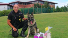 Police dog stabbed in the head during assault arrest is back on duty following quick recovery