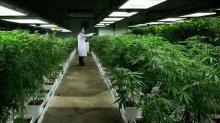 To make money on marijuana stocks, buy when the buzz is over