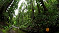 Counting species in California's Muir Woods